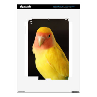 The Lovebird Skins For iPad 3