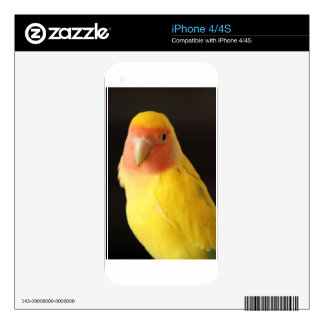 The Lovebird Skins For iPhone 4