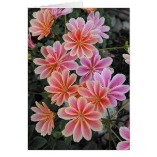 The Lovely Lewisia-Cotyledon Card