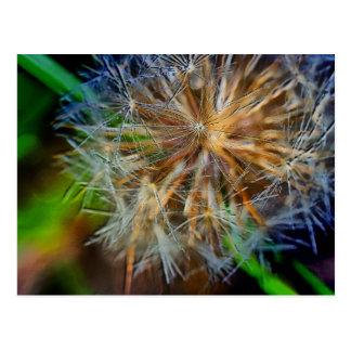 The Lucky Dandelion Postcard