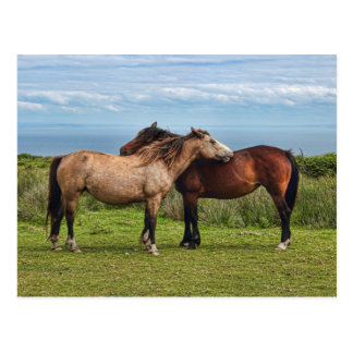The Lundy Ponies Postcard