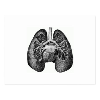 The lungs & heart postcard
