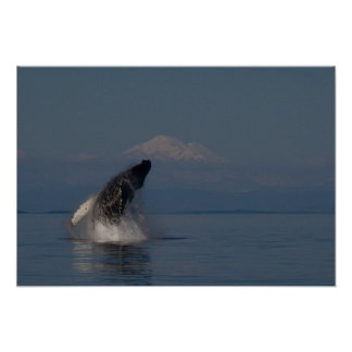 The Magic of Whales Print