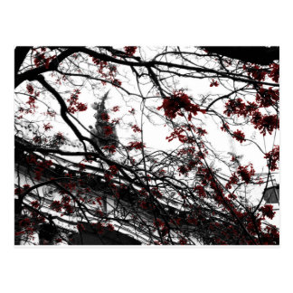 The magic red flowers tree postcard