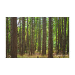 The Magical Forest Stretched Canvas Prints