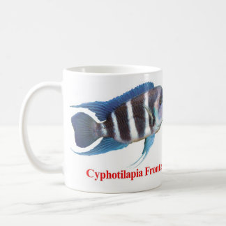The magnetic cup of Cyphotilapia frontosa