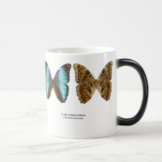 "The magnetic cup ""of Morpho deidamia"""