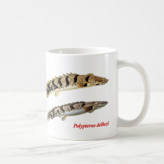 The magnetic cup of Polypterus delhezi