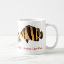 The magnetic cup of Siamese Tiger fish
