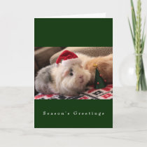 The Main Street Piggy Boys Holiday Card