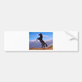 The majestic black stallion bumper sticker