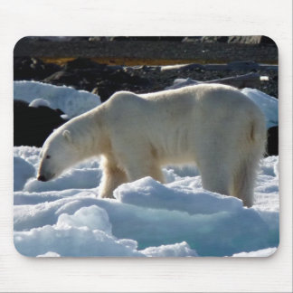 The majestic Polar bear in Svalbard Mouse Pad