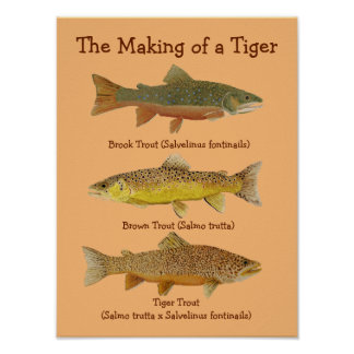 The Making of a Tiger Poster
