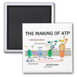 The Making Of ATP (Light-Dependent Photosynthesis) Refrigerator Magnets
