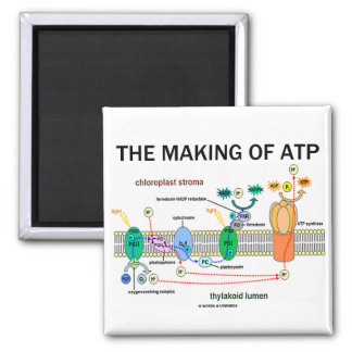 The Making Of ATP (Light-Dependent Photosynthesis) Magnet