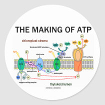 The Making Of ATP (Light-Dependent Photosynthesis) Sticker
