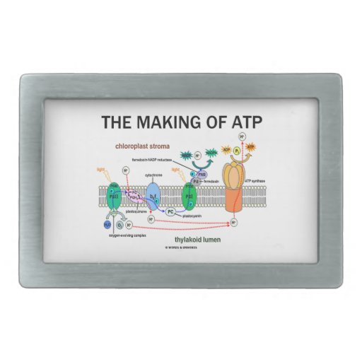 The Making Of ATP (Photosynthetic Attitude) Rectangular Belt Buckle
