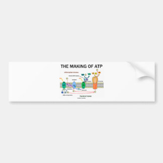 The Making Of ATP (Photosynthetic Attitude) Bumper Sticker