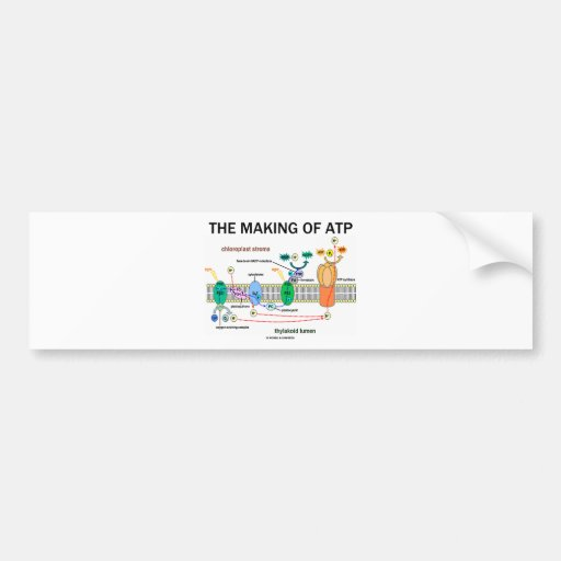 The Making Of ATP (Photosynthetic Attitude) Bumper Stickers