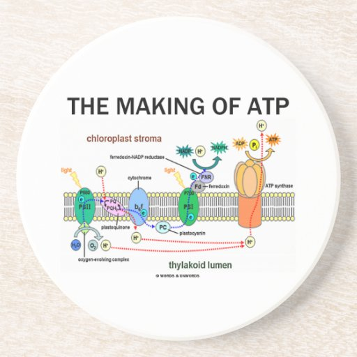 The Making Of ATP (Photosynthetic Attitude) Coasters