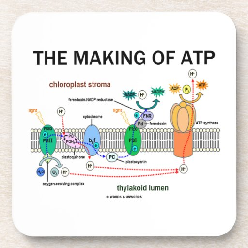 The Making Of ATP (Photosynthetic Attitude) Drink Coasters