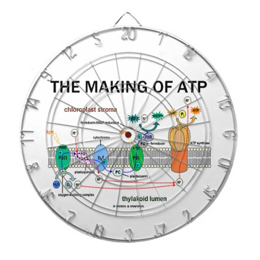 The Making Of ATP (Photosynthetic Attitude) Dart Board