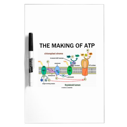 The Making Of ATP (Photosynthetic Attitude) Dry-Erase Whiteboard