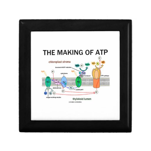 The Making Of ATP (Photosynthetic Attitude) Jewelry Box