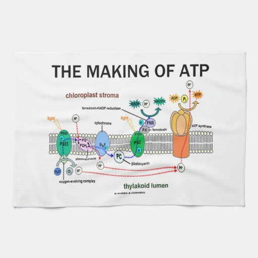 The Making Of ATP (Photosynthetic Attitude) Kitchen Towels