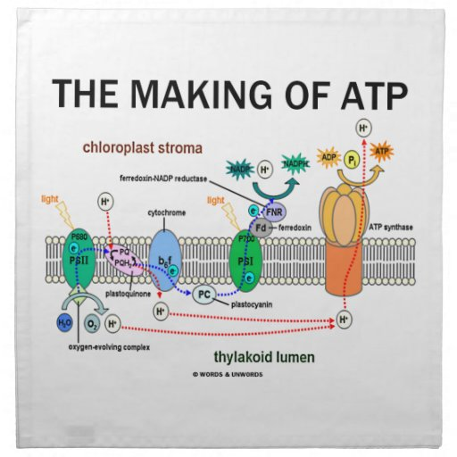 The Making Of ATP (Photosynthetic Attitude) Cloth Napkin