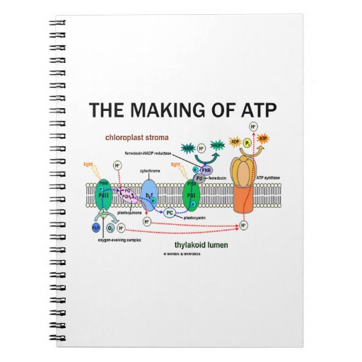 The Making Of ATP (Photosynthetic Attitude) Note Books