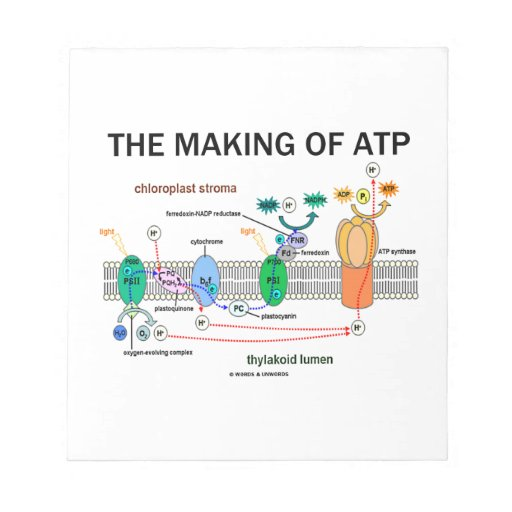 The Making Of ATP (Photosynthetic Attitude) Scratch Pad