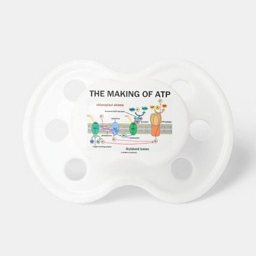 The Making Of ATP (Photosynthetic Attitude) Baby Pacifiers