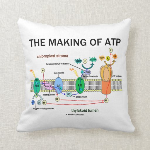 The Making Of ATP (Photosynthetic Attitude) Pillows