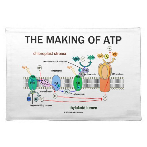 The Making Of ATP (Photosynthetic Attitude) Placemats