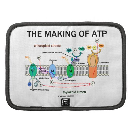 The Making Of ATP (Photosynthetic Attitude) Folio Planner