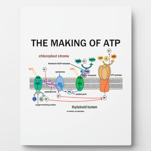 The Making Of ATP (Photosynthetic Attitude) Display Plaques