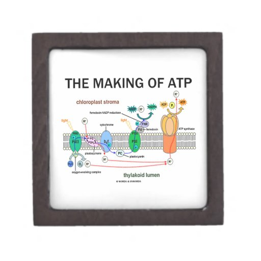 The Making Of ATP (Photosynthetic Attitude) Premium Jewelry Boxes
