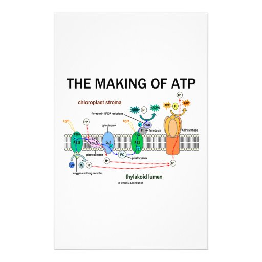 The Making Of ATP (Photosynthetic Attitude) Stationery