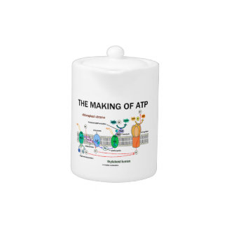 The Making Of ATP (Photosynthetic Attitude)