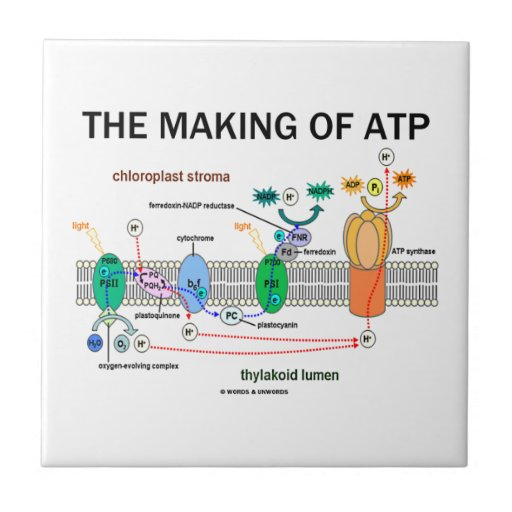 The Making Of ATP (Photosynthetic Attitude) Tiles