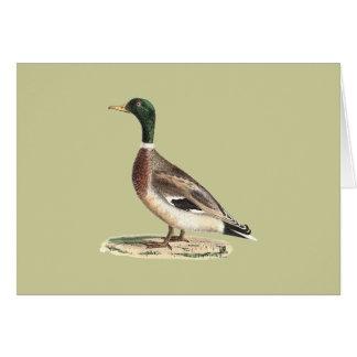 The Mallard(Anas boschas) Greeting Card