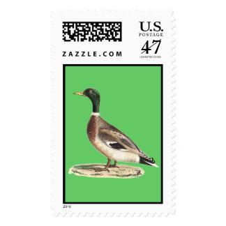 The Mallard(Anas boschas) Postage
