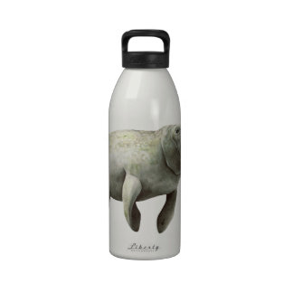 THE MANATEE CURIOSITY REUSABLE WATER BOTTLES