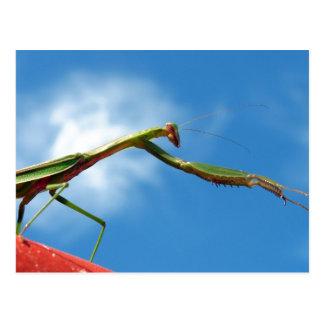 The Mantis Postcard
