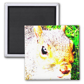 The many faces of Squirrel 1 Magnet