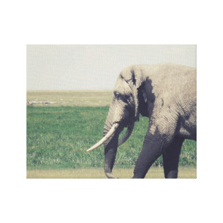 The March of a Elephant Canvas Print