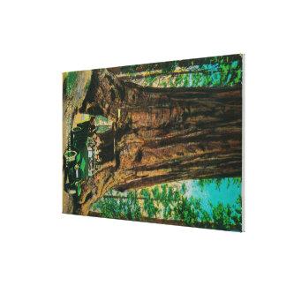 The Mariposa Big Tree Grove, Yosemite Stretched Canvas Prints