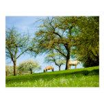 The Meadow Postcard