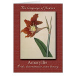 The Meaning of the Amaryllis Greeting Card